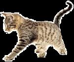 cat urine odours